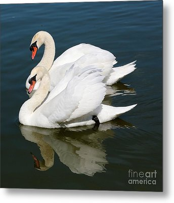 Synchronized Swans Metal Print by Carol Groenen