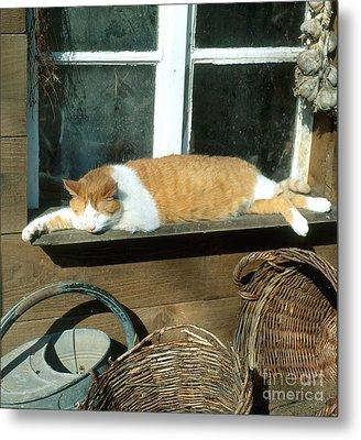 Tabby Cat Metal Print by Hans Reinhard