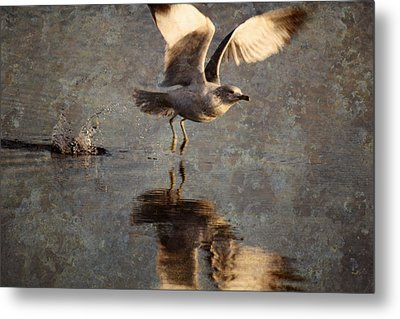 Take Flight Metal Print by Andrew Pacheco