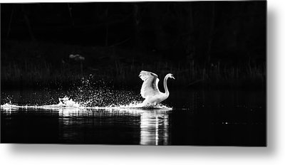 Take Off Metal Print by Rose-Maries Pictures
