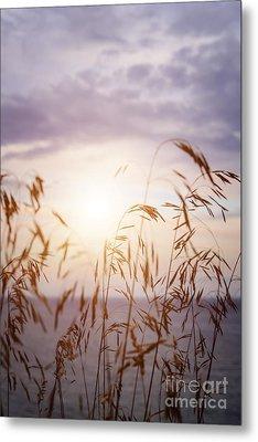Tall Grass At Sunset Metal Print by Elena Elisseeva