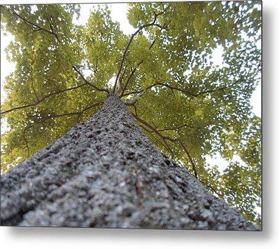 Tall Tree Metal Print by Jenna Mengersen