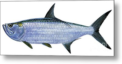 Tarpon Metal Print by Carey Chen