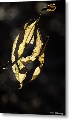 Tattered Leaf Metal Print by Fran Gallogly