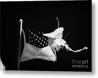 Tattered Torn Worn Us Flag Flying From Flagpole Metal Print by Joe Fox