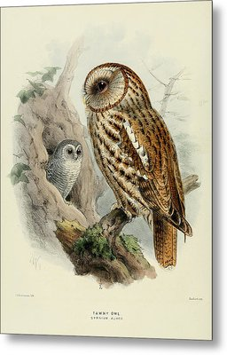 Tawny Owl  Metal Print by J G Keulemans