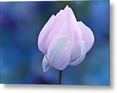 Tender Morning With Lotus Metal Print by Jenny Rainbow
