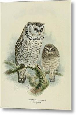 Tengmalm's Owl  Metal Print by J G Keulemans