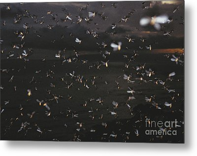 Termite Mating Swarm Metal Print by Gregory G. Dimijian, M.D.