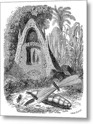 Termite Mound And Castes Metal Print by Spl