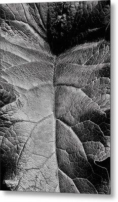 Terrestrial  Metal Print by JC Findley