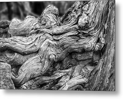 Textures Of Nature Black And White Metal Print by Jack Zulli