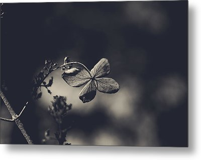 That Special Warmth Metal Print by Laurie Search