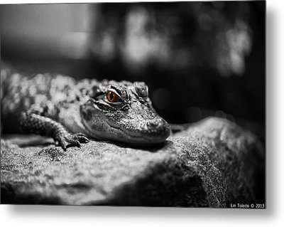 The Alligator's Eying You Metal Print by Linda Leeming