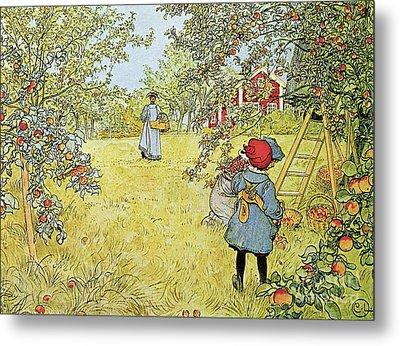 The Apple Harvest Metal Print by Carl Larsson