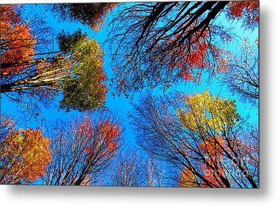 The Autumn Leaves At Potato Creek Metal Print by Tina M Wenger