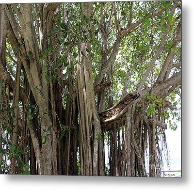 The Banyan Tree Metal Print by Megan Dirsa-DuBois