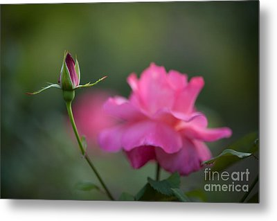 The Beauty And The Promise Metal Print by Mike Reid