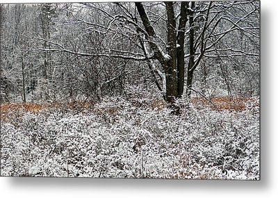 The Beauty Of Winter Metal Print by Aimee L Maher Photography and Art Visit ALMGallerydotcom