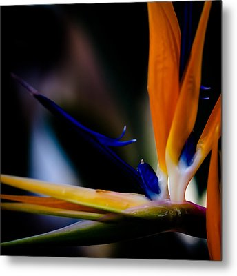 The Bird Of Paradise Metal Print by David Patterson