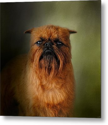 The Brussels Griffon Metal Print by Jai Johnson