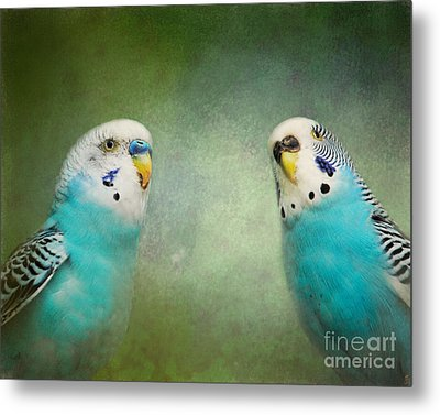 The Budgie Collection - Budgie Pair Metal Print by Jai Johnson
