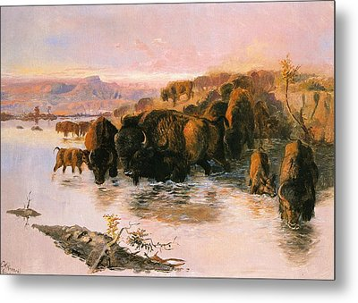 The Buffalo Herd Metal Print by Charles Russell