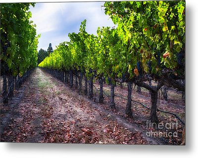 The Cabernet Is Ready Metal Print by George Oze