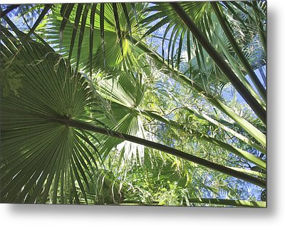 The Canopy Metal Print by David Rizzo