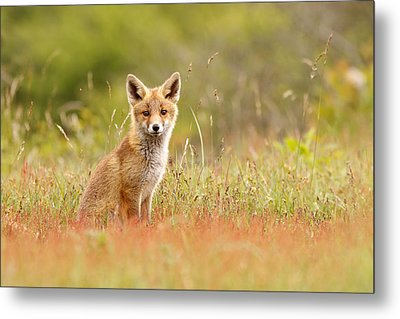 The Catcher In The Sorrel Metal Print by Roeselien Raimond