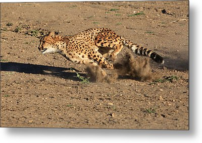 The Chase Metal Print by Donna Kennedy