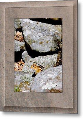 The Chipmunk Metal Print by Patricia Keller