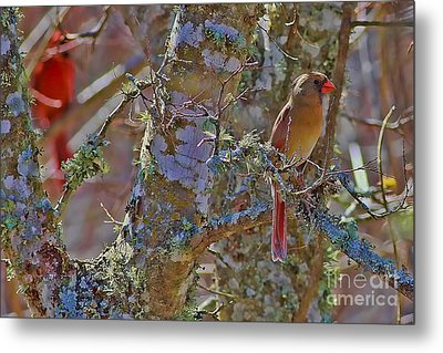 The Cold Shoulder Metal Print by Gary Holmes