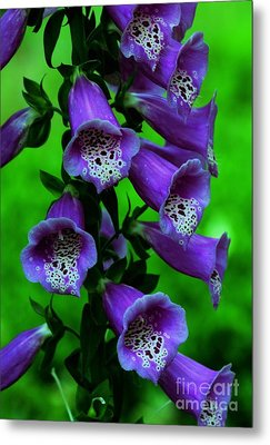 The Color Purple Metal Print by Kathleen Struckle