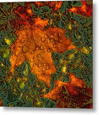 The Colors Of Autumn Metal Print by David Patterson
