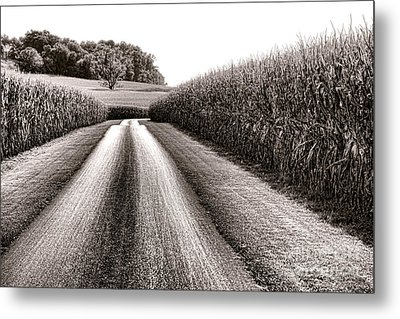 The Corn Road Metal Print by Olivier Le Queinec