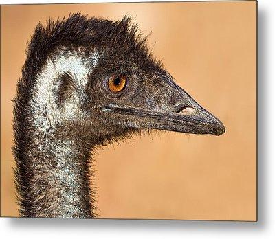 The Day I Met An Emu Metal Print by Mr Bennett Kent