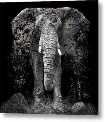 The Disappearance Of The Elephant Metal Print by Erik Brede