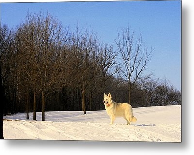 The Dog On The Hill Metal Print by Kay Novy