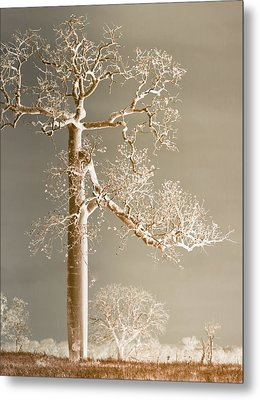 The Dreaming Tree Metal Print by Holly Kempe