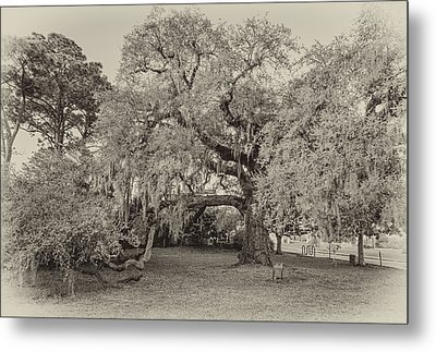 The Dueling Oak - A Place For Dying Bw Metal Print by Steve Harrington