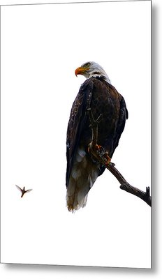 The Eagle And The Hummingbird Metal Print by Tranquil Light  Photography