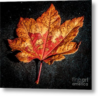 The Fallen Metal Print by Mitch Shindelbower