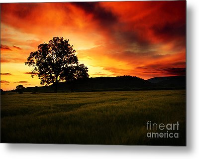 the Fire on the Sky Metal Print by Angel  Tarantella