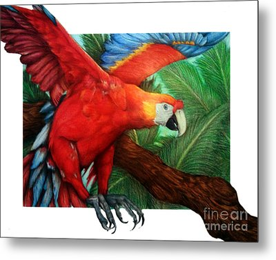 The Flight Of The Macaw Metal Print by Derrick Rathgeber