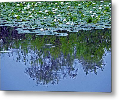 The Forest Beneath The Lilypads Metal Print by Jean Hall