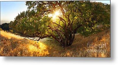 The Giving Tree Metal Print by Matt Tilghman