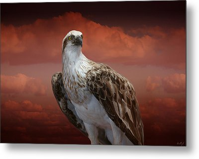The Glory Of An Eagle Metal Print by Holly Kempe