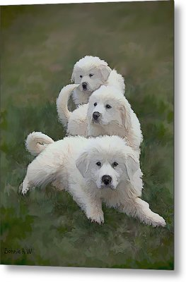 The Great Pyranise Pups  Metal Print by Bonnie Willis