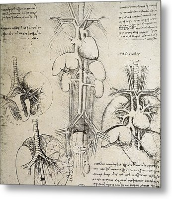 The Heart And The Circulation Metal Print by Leonardo Da Vinci